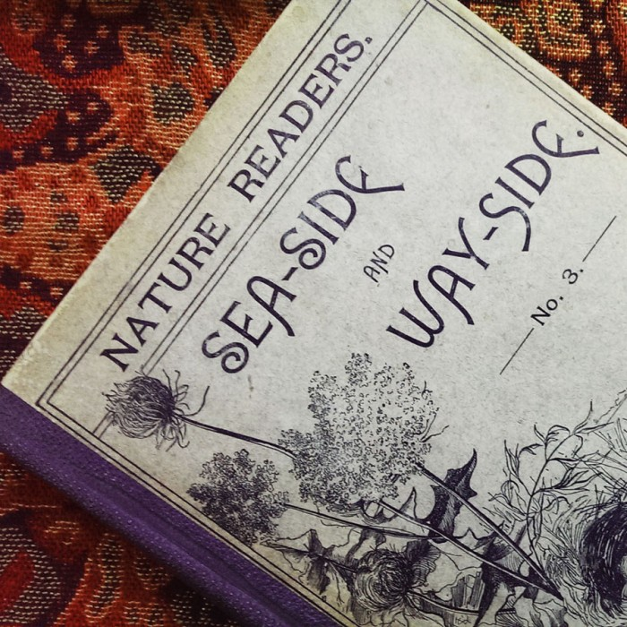 Seaside and Wayside, Antique book